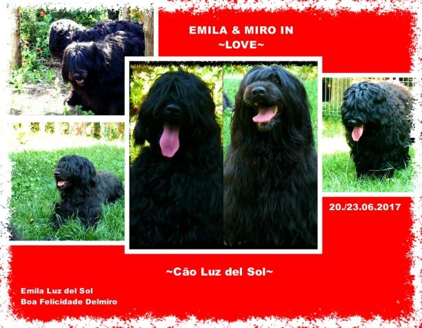 Portugiesische Wasserhunde Zucht Beate Matz - Familienhunde
